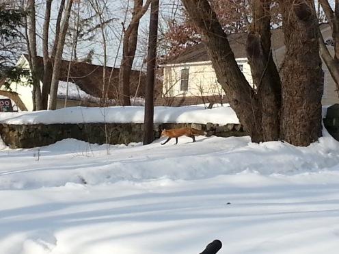 Snow & Fox